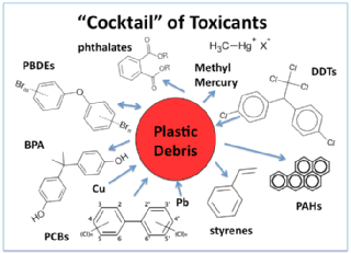 Cocktail of toxicants that can be associated with plastic debris in aquatic habitats